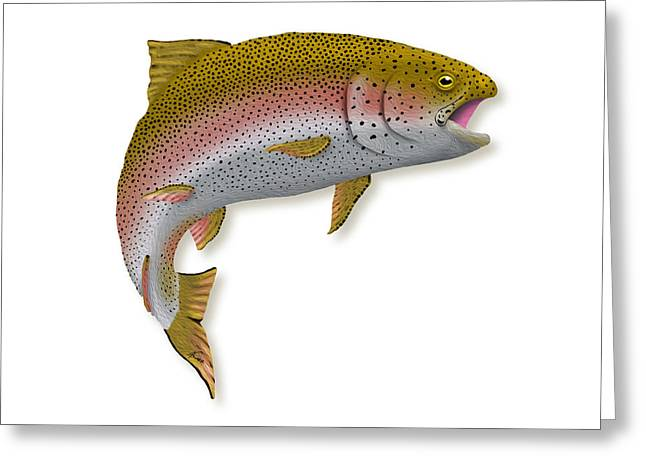 Rainbow Trout Greeting Cards - Rainbow Trout 1 Greeting Card by Agustin Goba