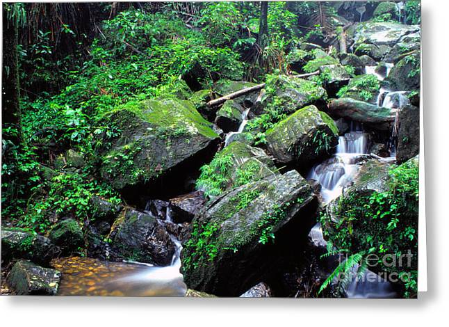Yunque Greeting Cards - Rainforest Waterfall Greeting Card by Thomas R Fletcher