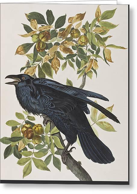 Raven Greeting Card by John James Audubon