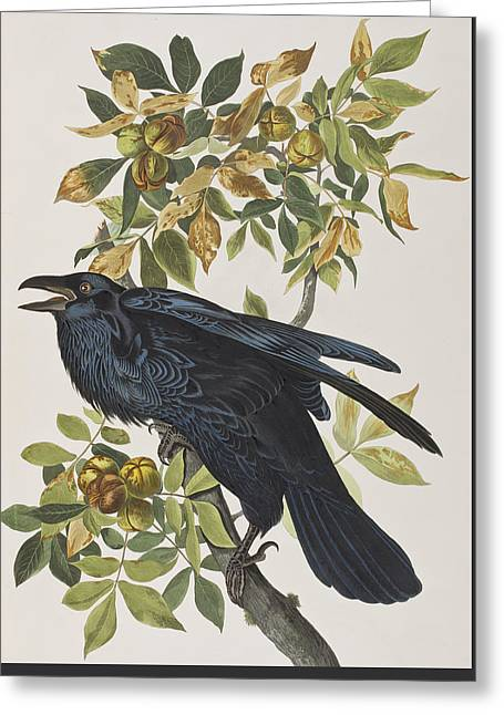 Breeds Greeting Cards - Raven Greeting Card by John James Audubon