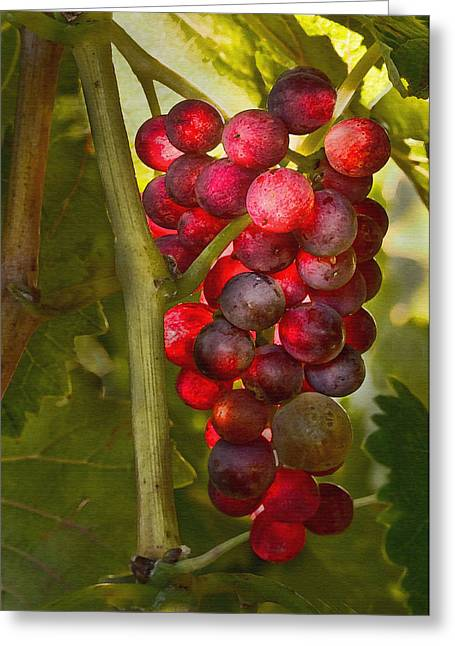 Grape Vines Greeting Cards - Ready for Harvest Greeting Card by Sharon Foster