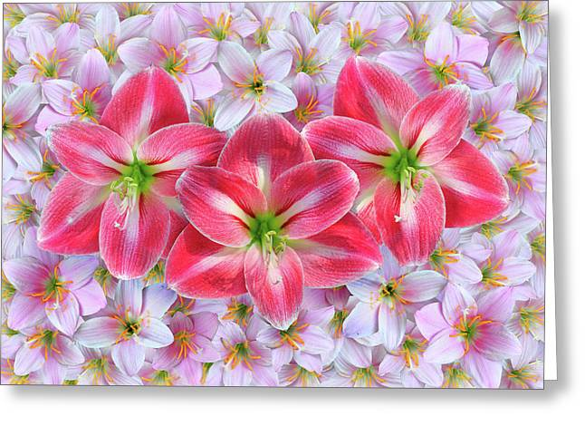 Red Amaryllis Greeting Card by Edwin Verin