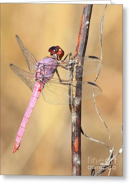 Red Dragonfly Portrait Greeting Card by Carol Groenen