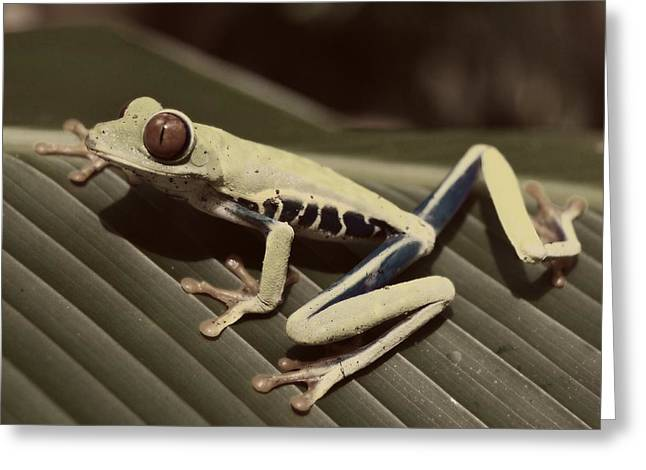 Tree Frog Greeting Cards - Red - Eyed Tree Frog Greeting Card by Carey James Balboa