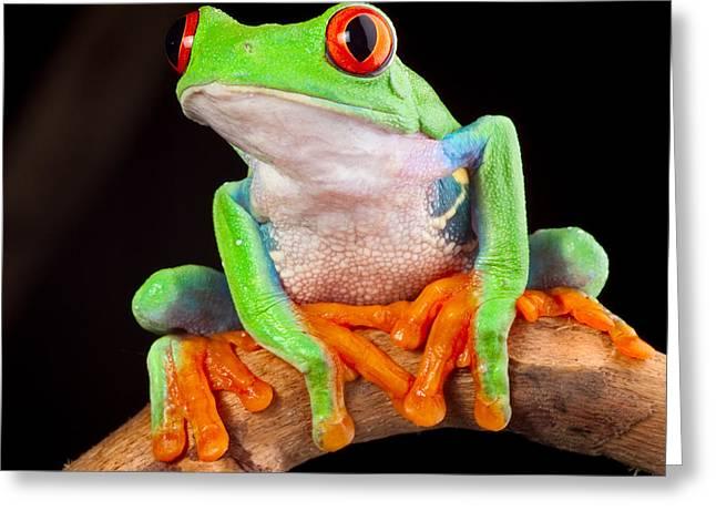 Treefrog Greeting Cards - Red Eyed Tree Frog Greeting Card by Dirk Ercken