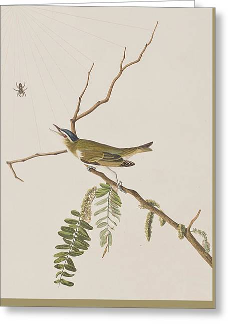 Insects Drawings Greeting Cards - Red Eyed Vireo Greeting Card by John James Audubon