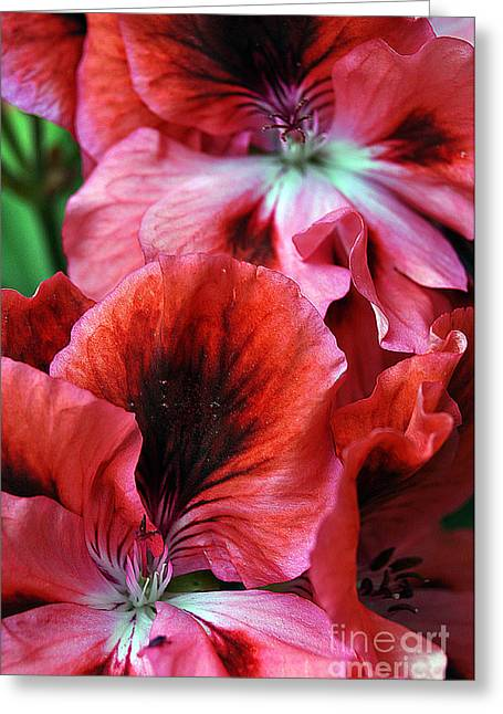 Bruster Greeting Cards - Red Floral Greeting Card by Clayton Bruster