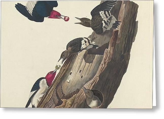 Red-headed Woodpecker Greeting Card by John James Audubon