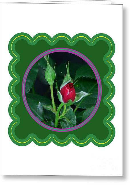 Fineartamerica Greeting Cards - Red Rose Bud Flower Floral posters photography and graphic fusion art NavinJoshi FineArtAmerica Pixe Greeting Card by Navin Joshi