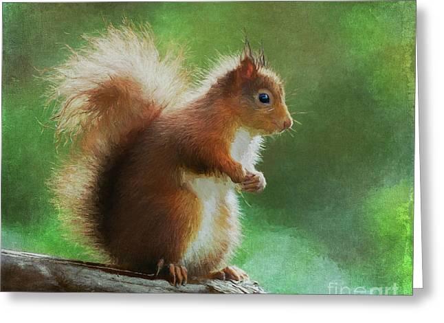 Red Squirrel Sciurus Vulgaris Greeting Card by Liz Leyden