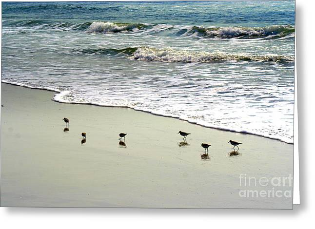 Sea Birds Greeting Cards - Reflections Greeting Card by John Kenealy