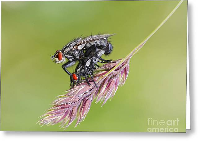 Pleasure Pair Greeting Cards - Reproduction - At The Height Of Bliss Greeting Card by Michal Boubin