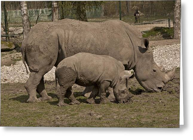 Rhinoceros Greeting Cards - Rhinoceros Greeting Card by FL collection