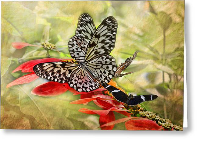 Kite Greeting Cards - Rice Paper Butterflies Greeting Card by TN Fairey