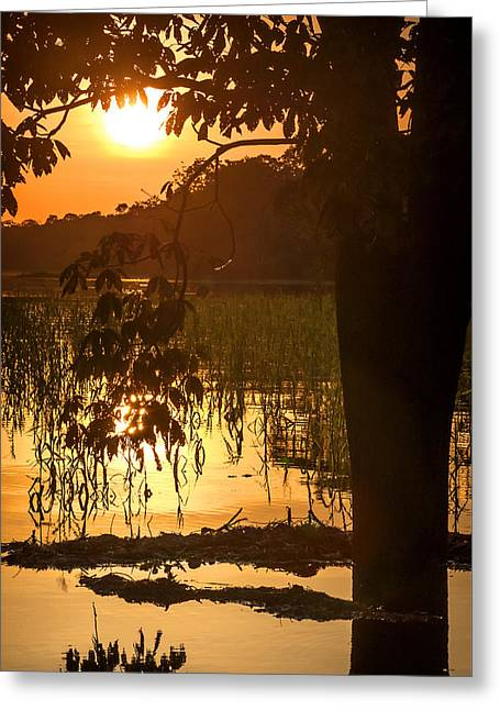 Mangrove Forest Greeting Cards - River in the Amazon Rainforest at dusk Peru Greeting Card by Eduardo Huelin