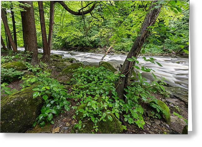 Akron Falls Greeting Cards - River in the Woods Greeting Card by Greg McGill