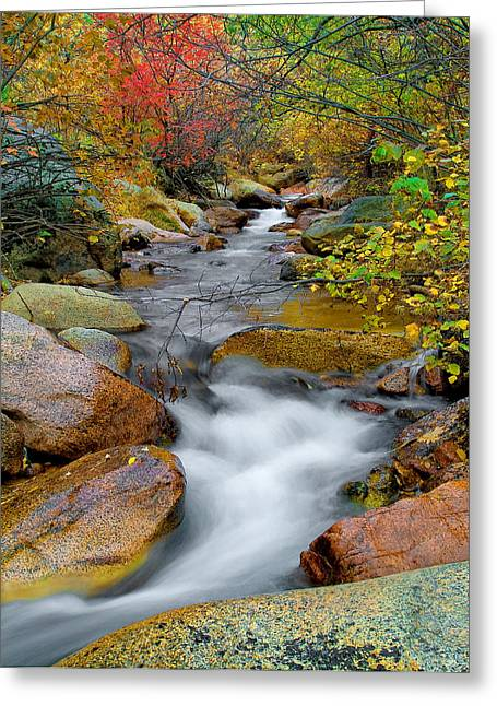 Fall Photography Greeting Cards - Rock Creek Greeting Card by Tim Reaves