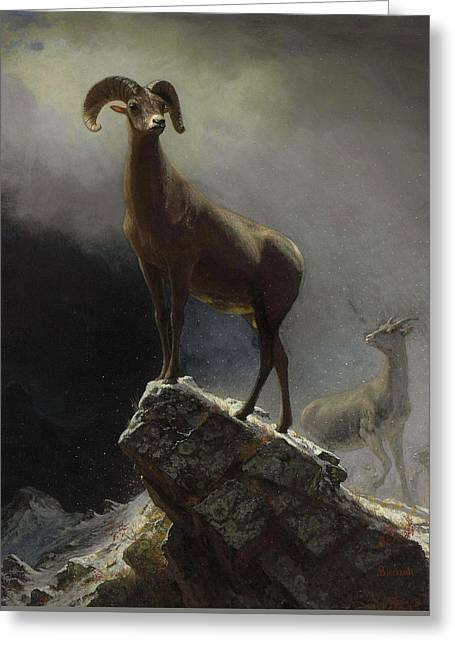 Rocky Mountain Sheep Or Big Horn, Ovis, Montana Greeting Card by Albert Bierstadt