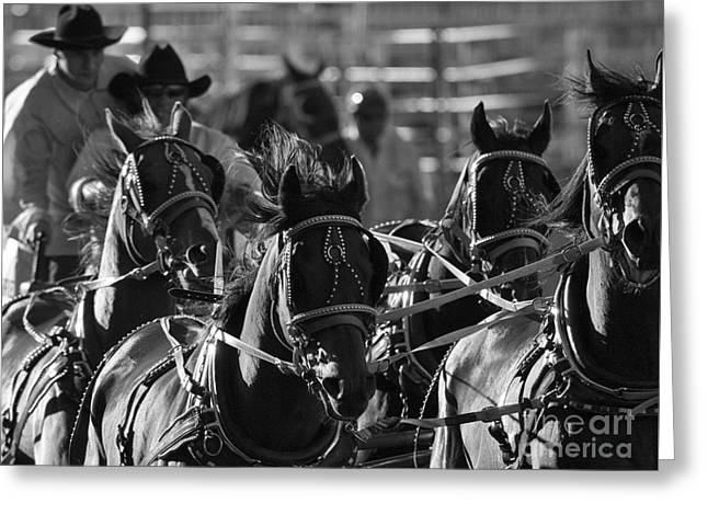 Race Horse Greeting Cards - Rodeo Chuckwagon Race 2 Greeting Card by Bob Christopher