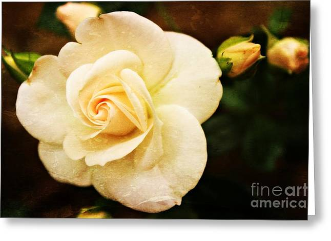 Gardening Greeting Cards - Romance Greeting Card by Clare Bevan