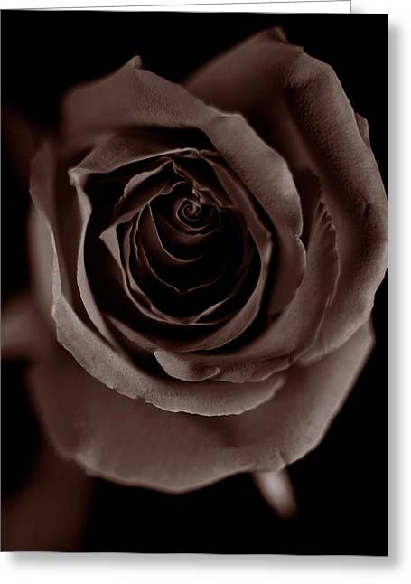 Floral Photographs Greeting Cards - Rose Greeting Card by Markus Goerg
