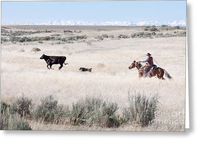 Working Cowboy Photographs Greeting Cards - Round Up Greeting Card by Cindy Singleton