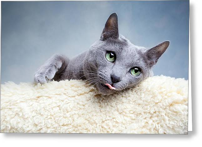 Domestic Shorthair Greeting Cards - Russian Blue Cat Greeting Card by Nailia Schwarz