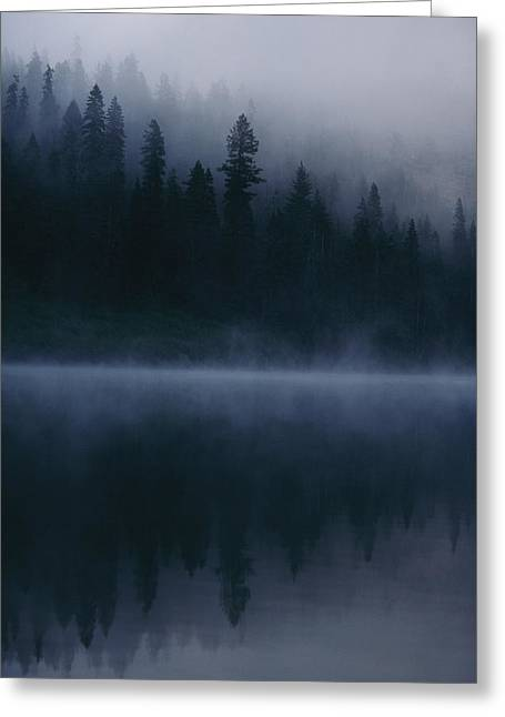 Douglas Fir Trees Greeting Cards - Sacred Spots Around Mount Shasta Greeting Card by Michael Nichols