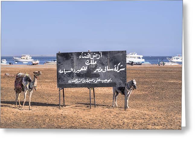 Kites Greeting Cards - Safaga - Egypt Greeting Card by Joana Kruse