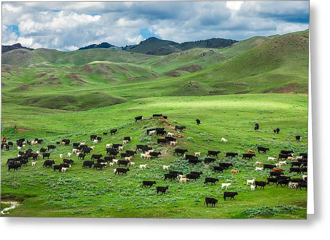 White Farm Greeting Cards - Salt and Pepper Pasture Greeting Card by Todd Klassy