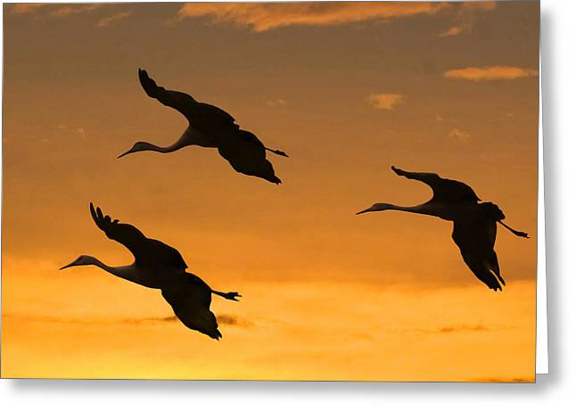 SANDHILL CRANES AT DUSK Greeting Card by Larry Linton