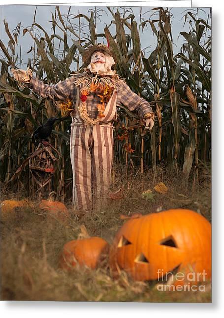 Jack O Lanterns Jackolantern Greeting Cards - Scarecrow in a Corn Field Greeting Card by Oleksiy Maksymenko
