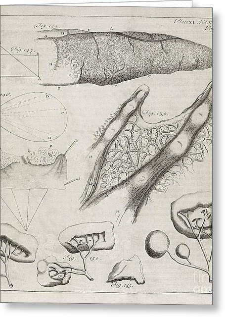 Philosophical Transactions Greeting Cards - Science Illustrations, 18th Century Greeting Card by Middle Temple Library
