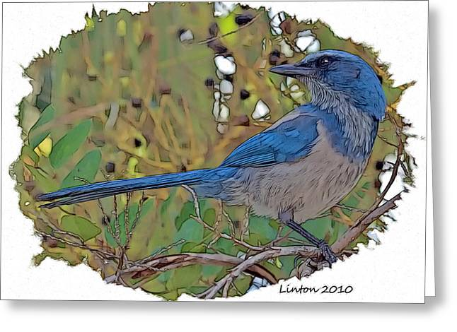 Scrub Jay Greeting Card by Larry Linton