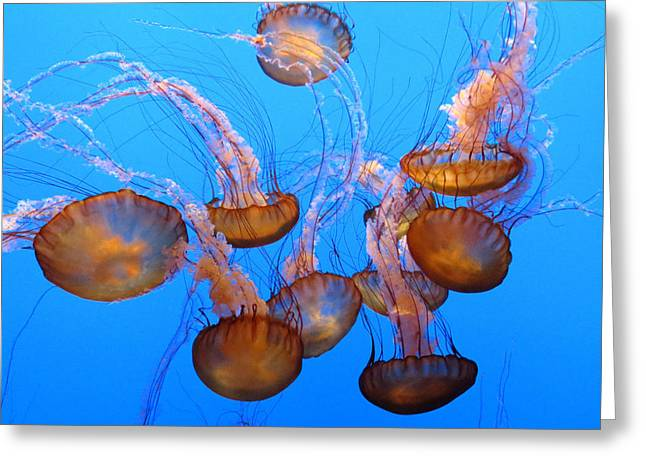 Sea Nettles Ballet 1 Greeting Card by Diane Wood