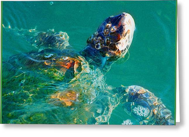 Sea Life Mixed Media Greeting Cards - Sea Turtle Greeting Card by W Gilroy