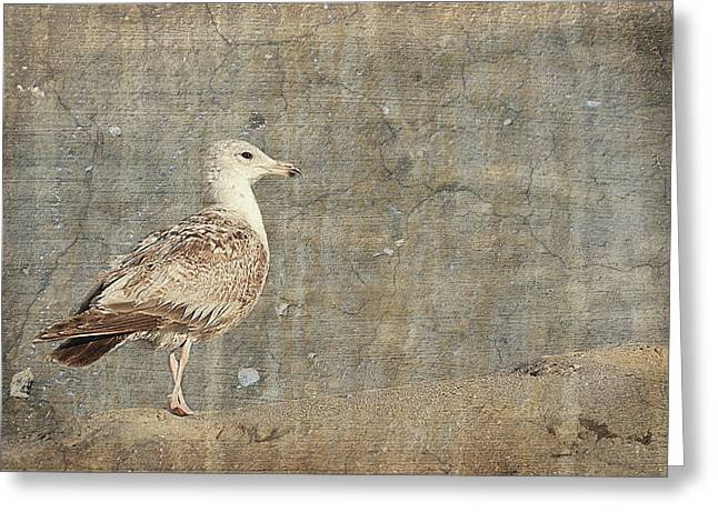 Seagulls Digital Greeting Cards - Seagull - Jersey Shore Greeting Card by Angie Tirado