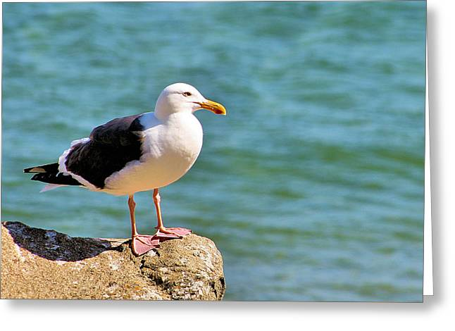 Docked Sailboats Greeting Cards - Seagull in Moro Bay Greeting Card by Bill Mollet