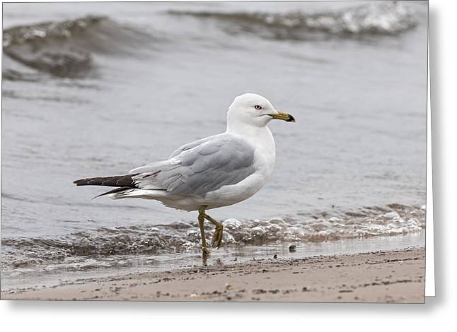 Foggy. Mist Greeting Cards - Seagull on foggy beach Greeting Card by Elena Elisseeva