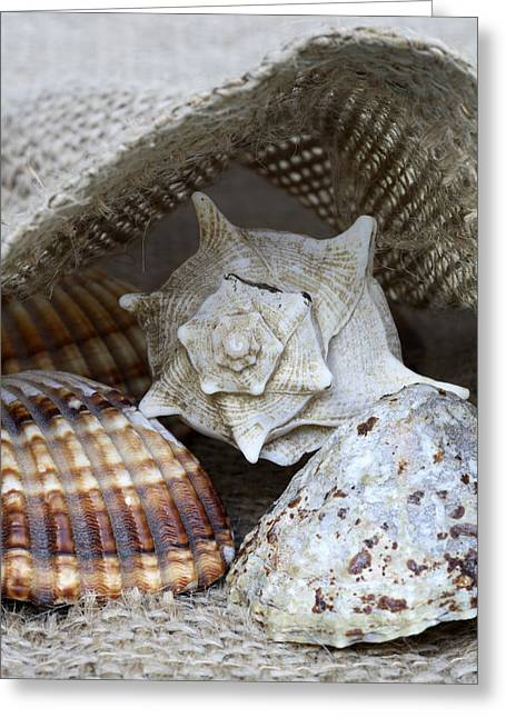 Sea Life Photographs Greeting Cards - Seashells Greeting Card by Frank Tschakert