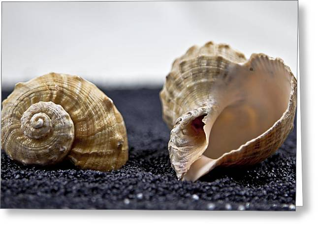 Contrast Greeting Cards - Seashells On Black Sand Greeting Card by Joana Kruse
