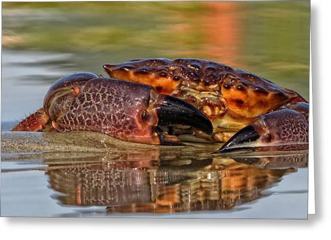 Pincers Greeting Cards - Seashore Crab Greeting Card by Guto Franga