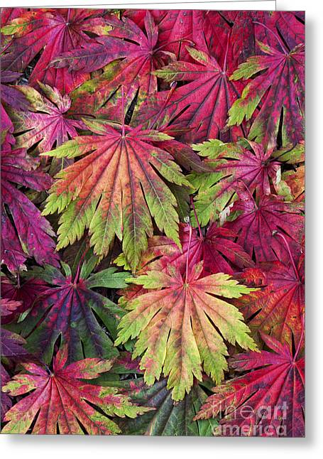Lobe Greeting Cards - Seasons End Greeting Card by Tim Gainey