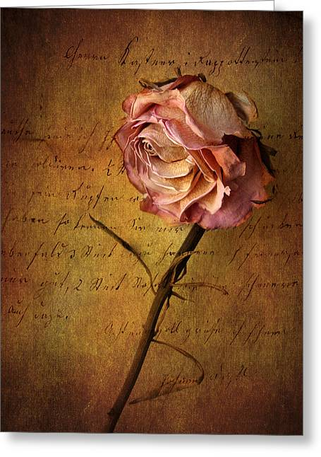 Single Rose Greeting Cards - Seule Greeting Card by Jessica Jenney