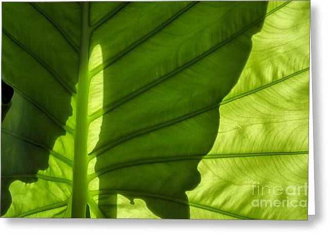 Botanical Greeting Cards - Shadow Greeting Card by Michelle Meenawong