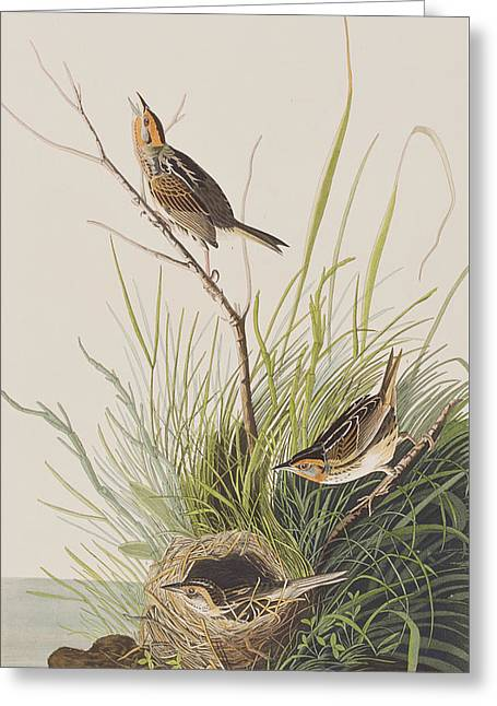 Finch Greeting Cards - Sharp Tailed Finch Greeting Card by John James Audubon