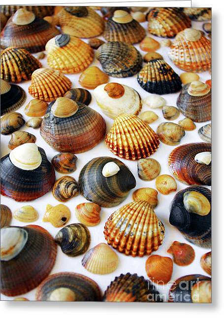 Mollusks Greeting Cards - Shell Background Greeting Card by Carlos Caetano