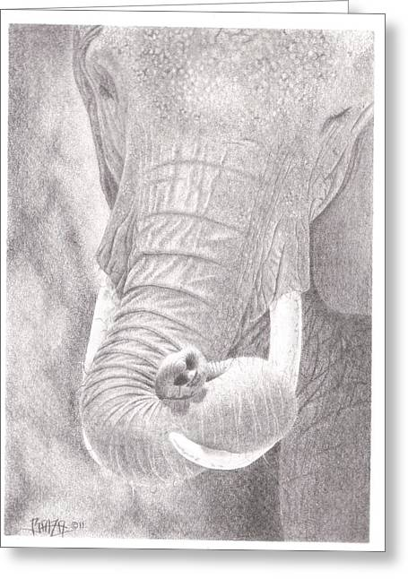Wild Life Drawings Greeting Cards - Siesta Greeting Card by Dino Baiza