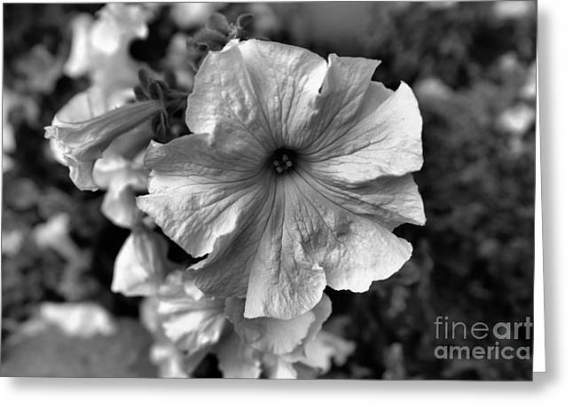 Simple Beauty Greeting Card by Jeff Swan