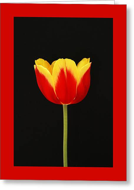 Pinks And Purple Petals Greeting Cards - Single Red and Yellow Tulip on Black Greeting Card by Allen Beatty